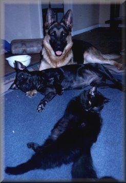 Jimmy 10 months old & his new family, Mindy the Staffy & Toti  the Cat.